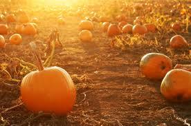 Halloween Singing Bowl Meditation Part 1