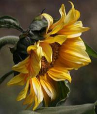Abundance Singing Bowl Meditation Series: The Habit Of Abundance